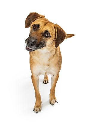 Cute medium size mixed breed dog with ye
