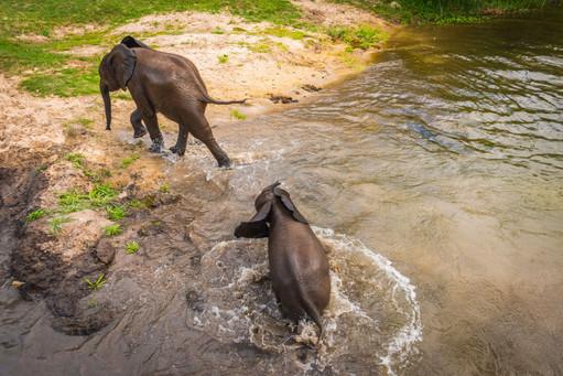 Baby Elephants, Zambia