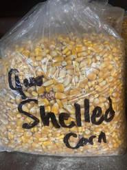 Shelled Corn