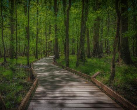 Congaree Swamp, SC