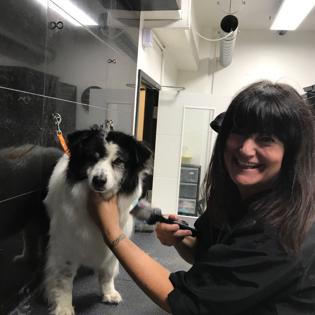 Collie dog grooming in London