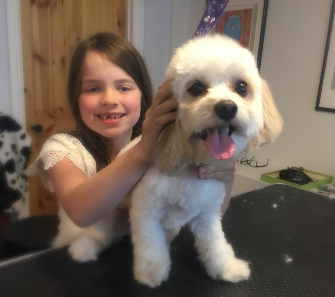 Cavachon Grooming Crouch End London