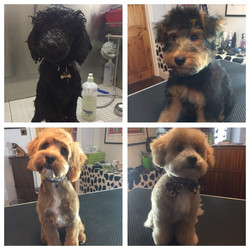Puppy Grooming Highgate