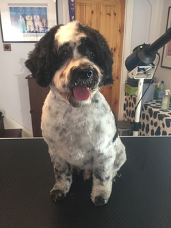 Crouch End Dog grooming