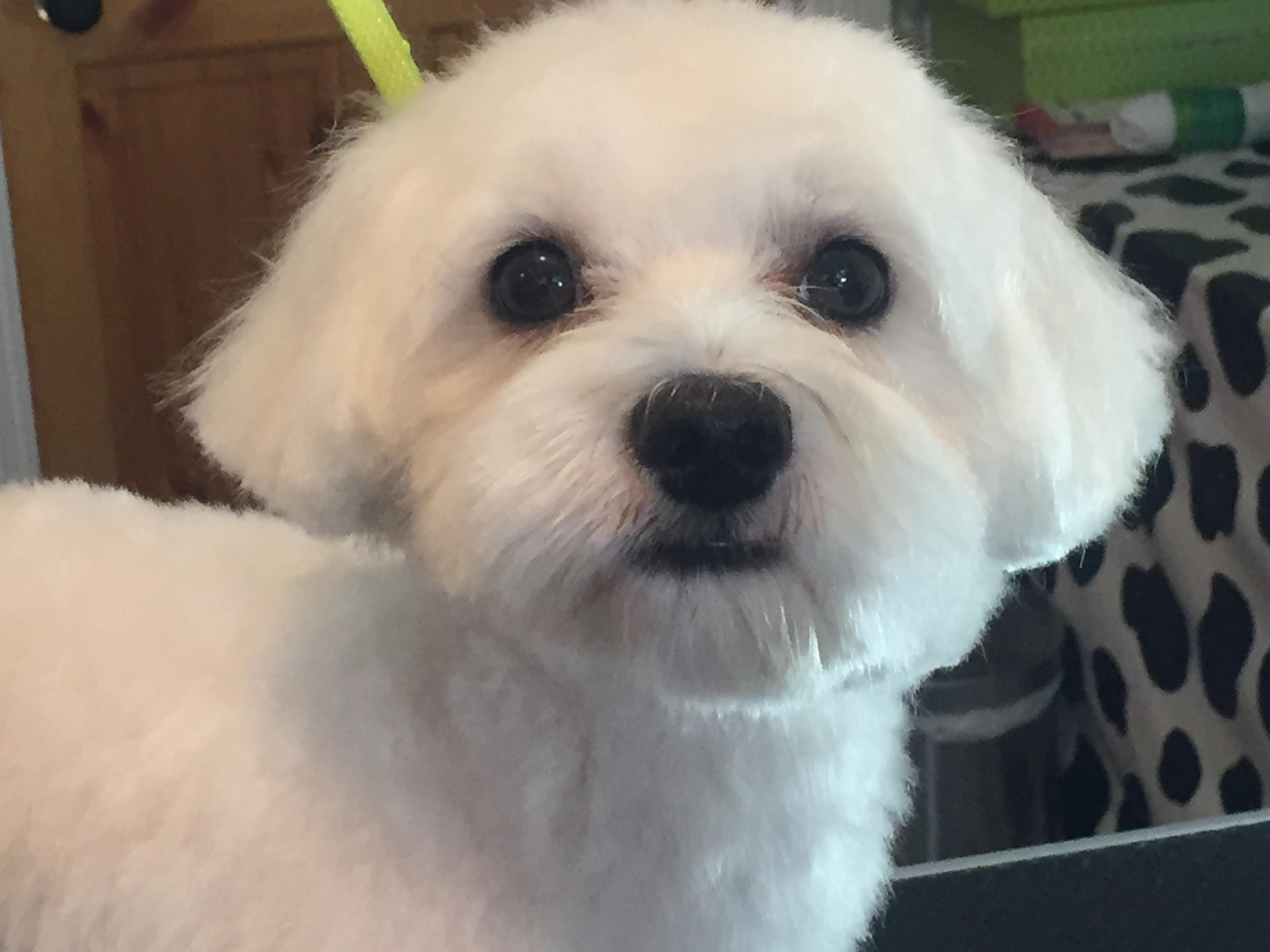 Hornsey N8 Dog grooming