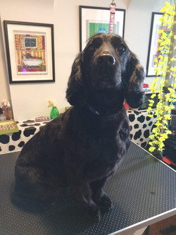 Pet Grooming in Crouch End