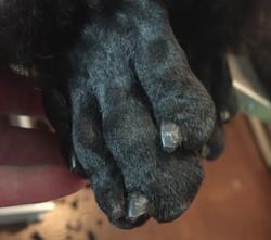Pawfect paws
