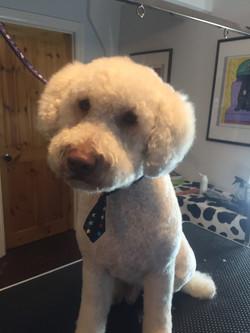 Dog grooming N10