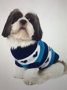 N8 Dog groomer
