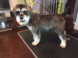 Dog Grooming Muswell Hill N10