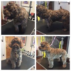 Highgate dog grooming