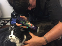 Cat grooming in Crouch End