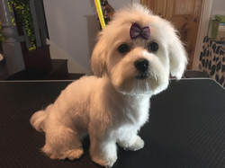 Dog Groomers near Muswell Hill N10