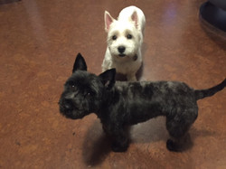 Hornsey pet grooming