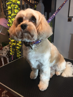Dog grooming Muswell Hill