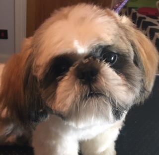 Puppy Grooming N8