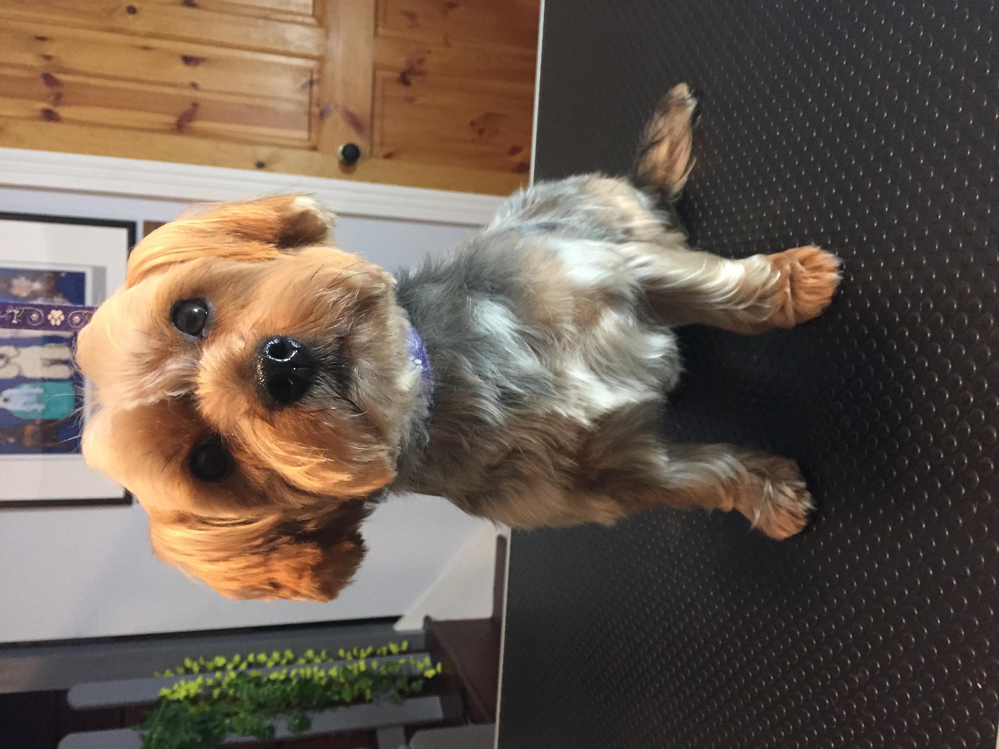 Dog grooming N8