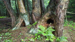 An Animal Habitate