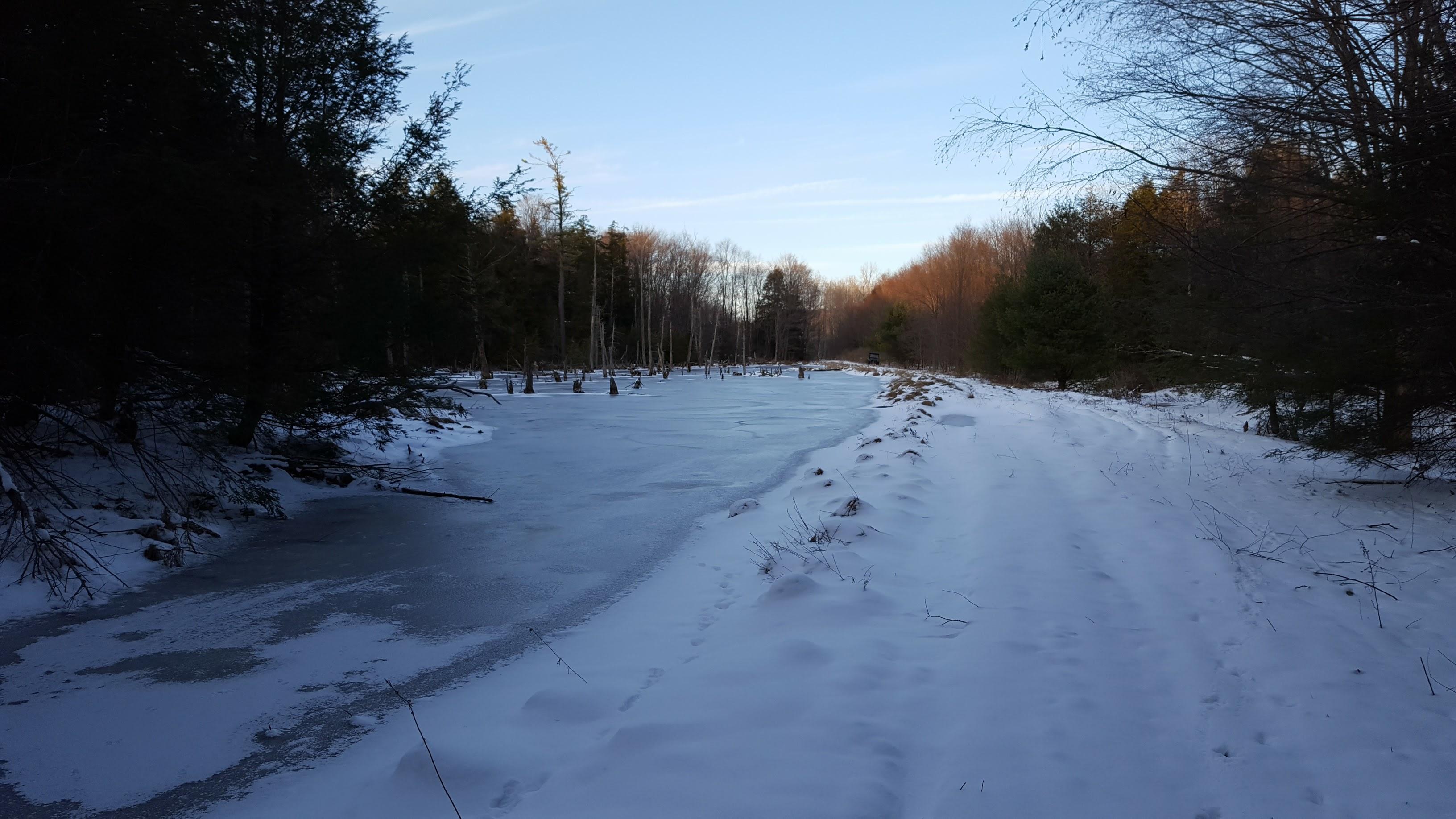Winter Bogs