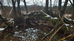 Trees Forgotten