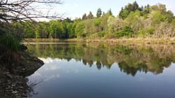 Translucent Ponds