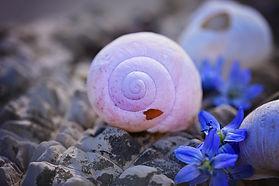 shell-756724_1920.jpg