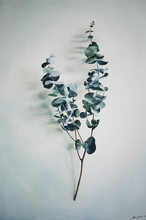 Eucalyptus Bush Stem