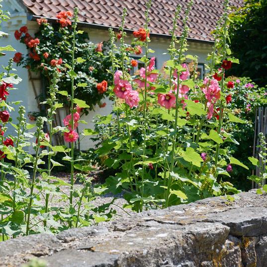 Cottage175.jpg