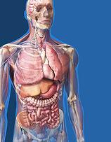 me_anatomy.jpg