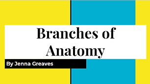 Branches of Anatomy.png