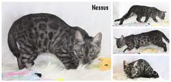 Nessus 14 weeks