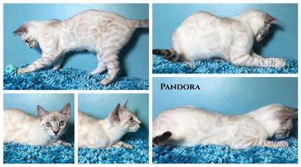 Pandora 22 weeks.jpg