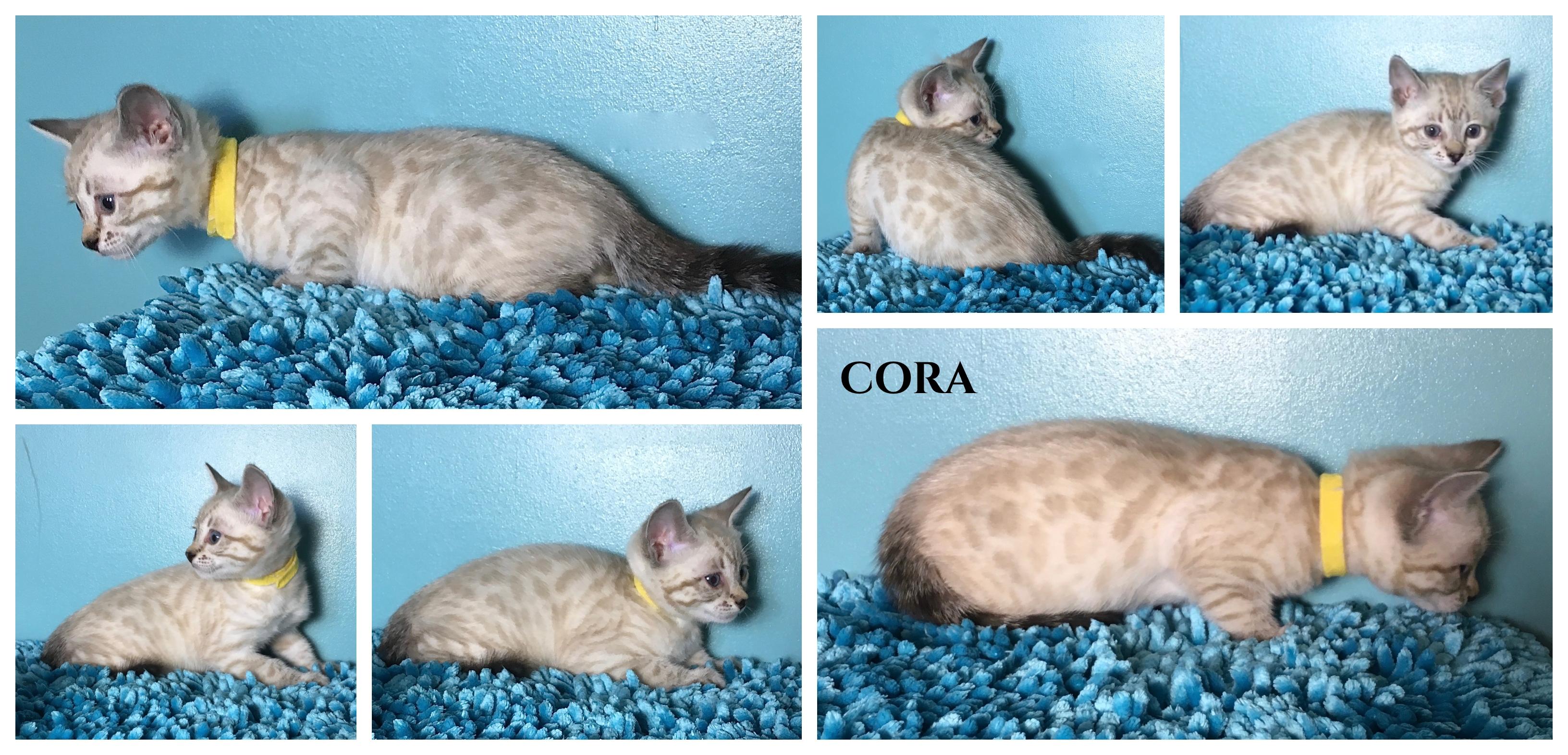 Cora 7 weeks