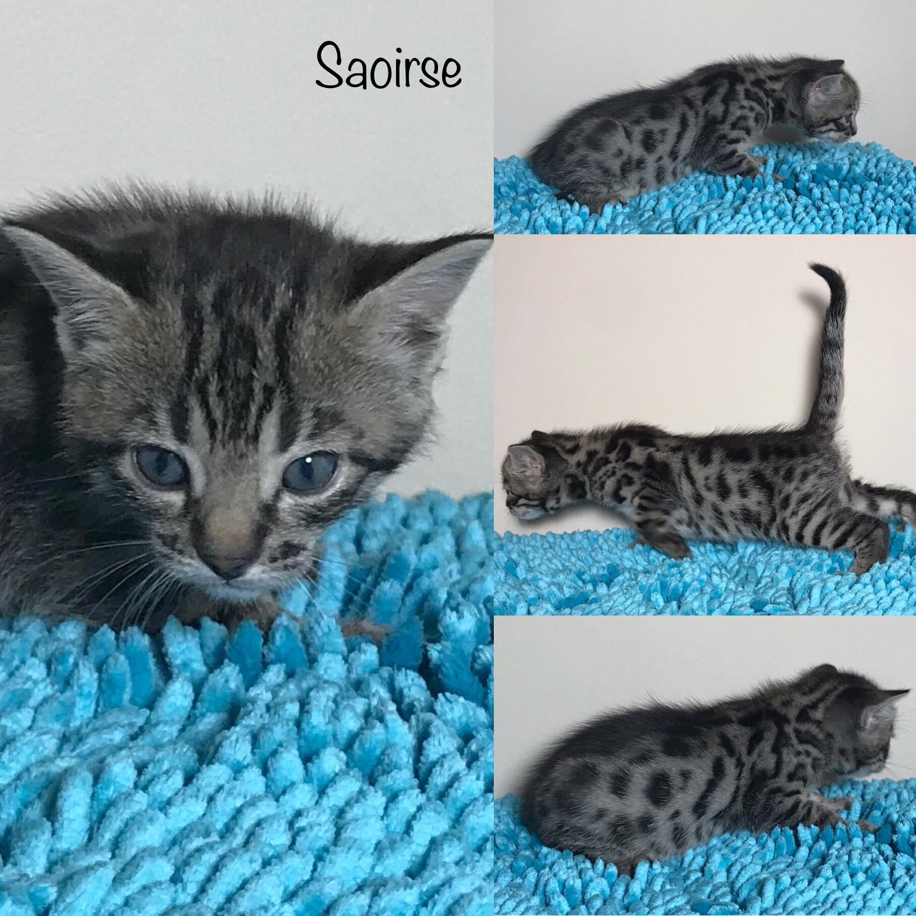 Saoirse 4 weeks