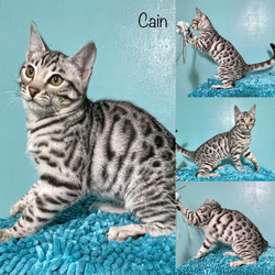 Cain 15 weeks