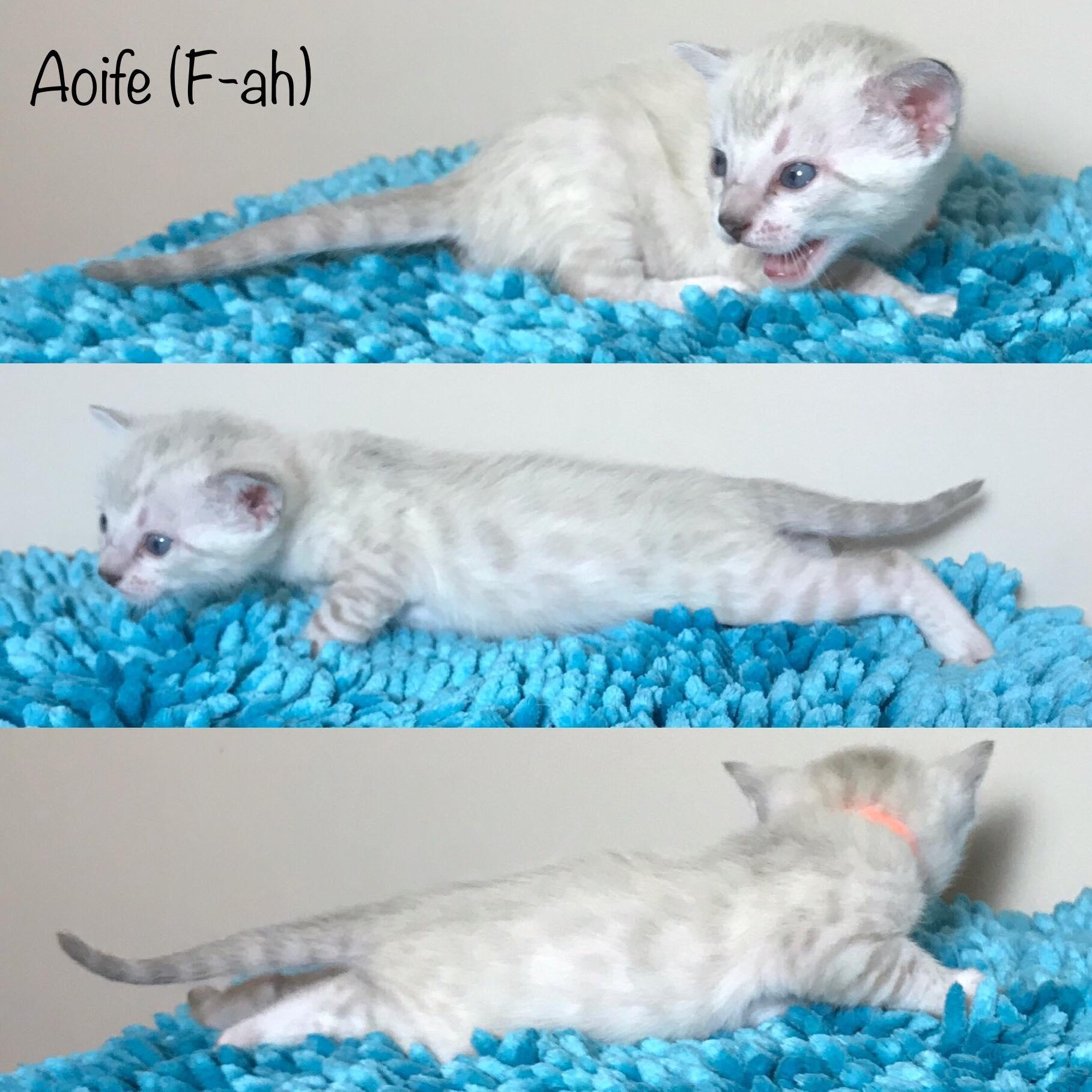 Aoife 3 weeks