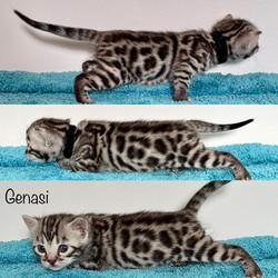 Genasi 3 weeks