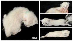 Neya 3 weeks