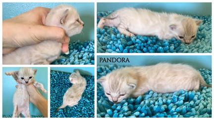 Pandora 3 weeks.jpg