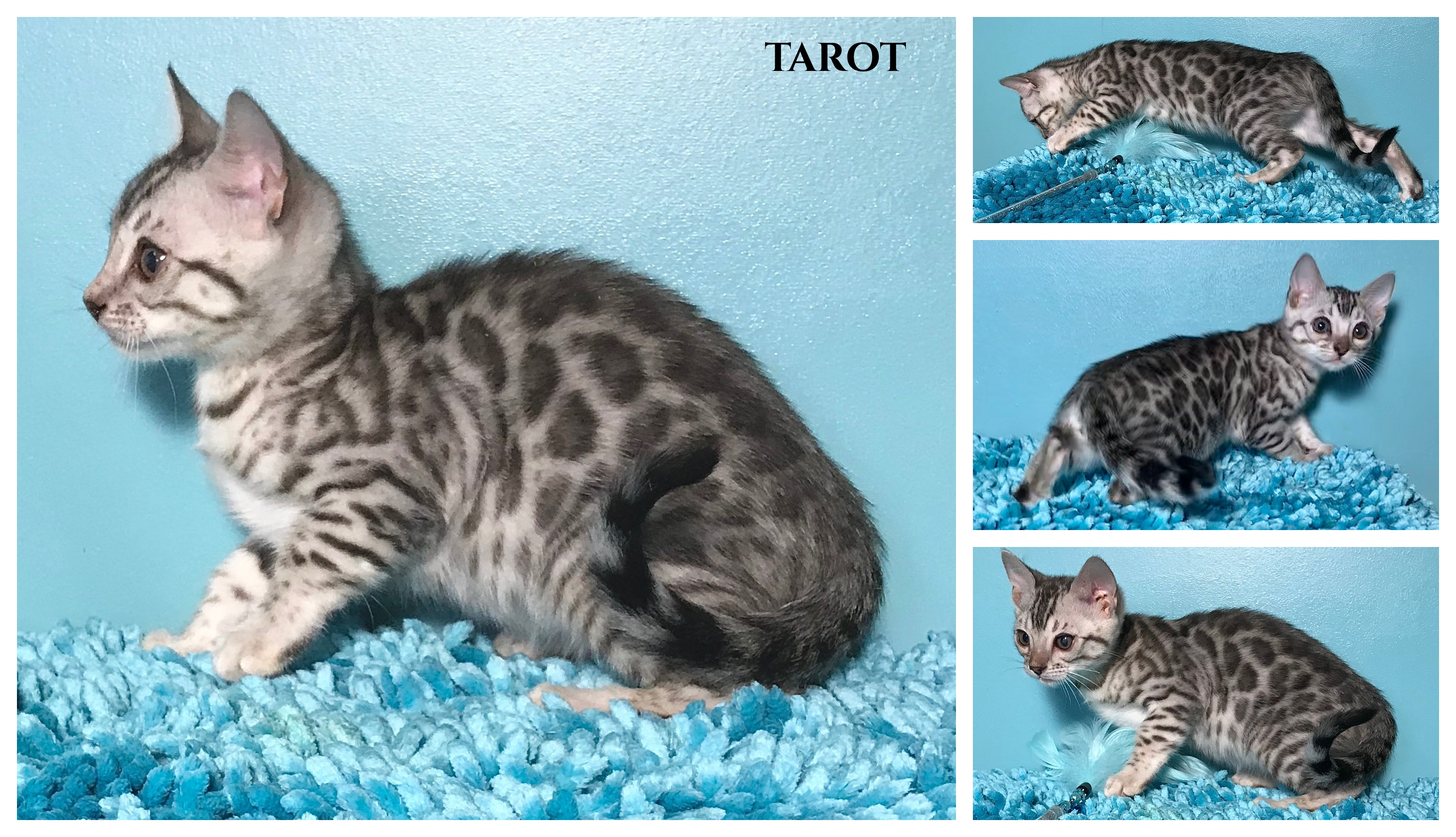 Tarot 9 weeks