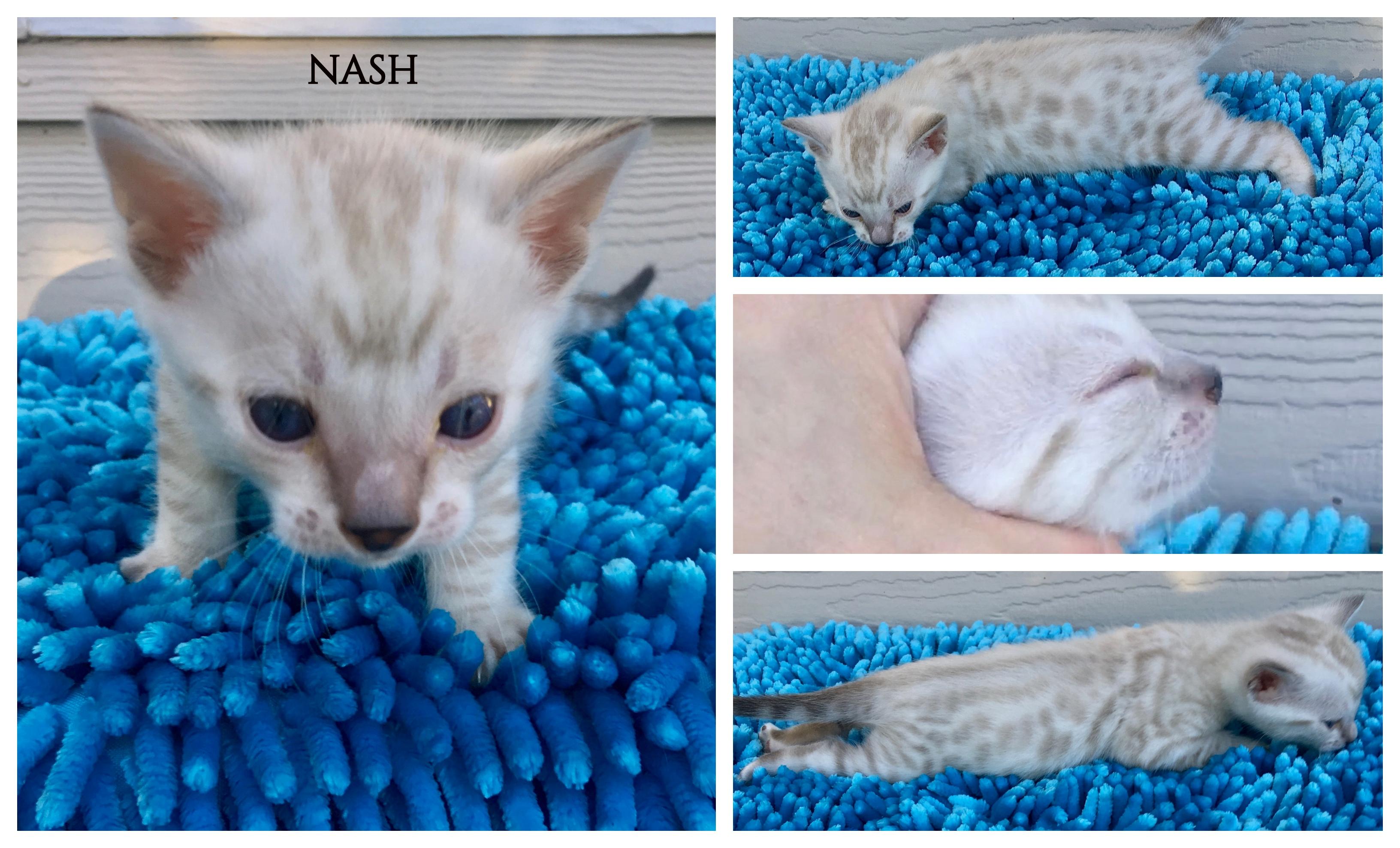 Nash 4 weeks
