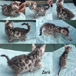 Zero 8 weeks