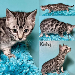 Kinley 8 weeks