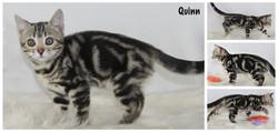 Quinn 10 weeks