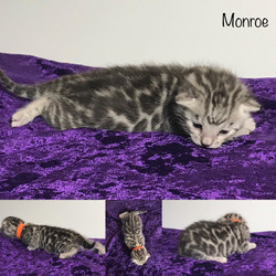 Monroe 2 weeks