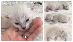 Sally 2 weeks