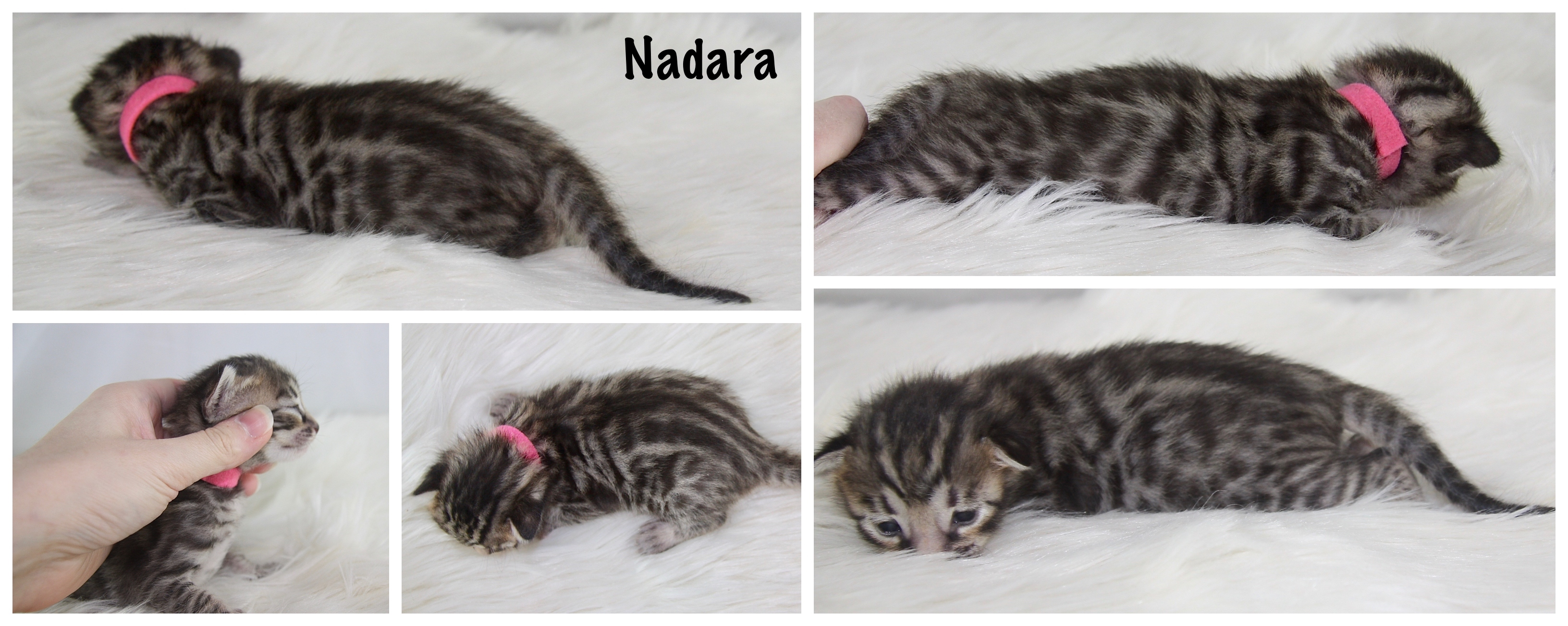 Nadara 2 weeks