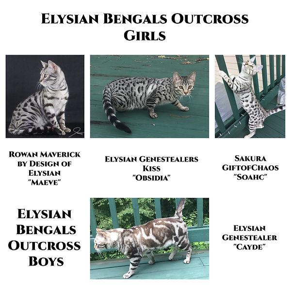 Outcross Cats.jpg