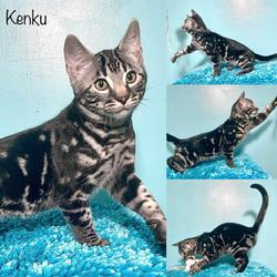 Kenku 14 weeks