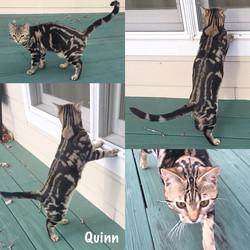 Quinn 27 weeks
